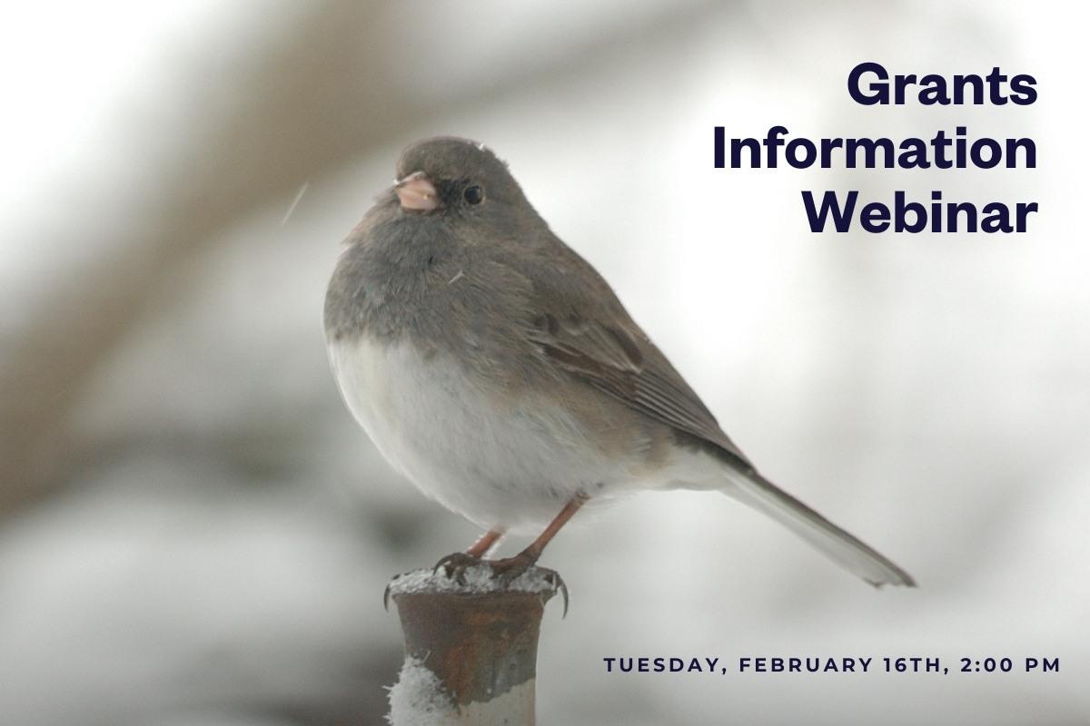 Grants information webinar, picture of a dark-eyed Junco